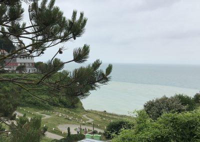 Pins et Pinèdes - Bois de Cise