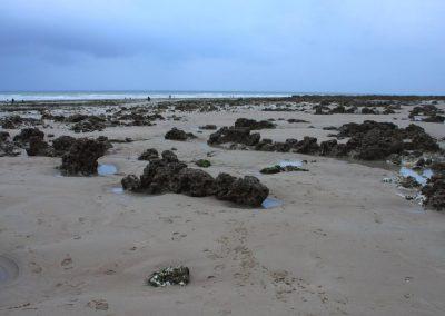 Marée basse - les rochers